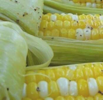 Épi de maïs cuit